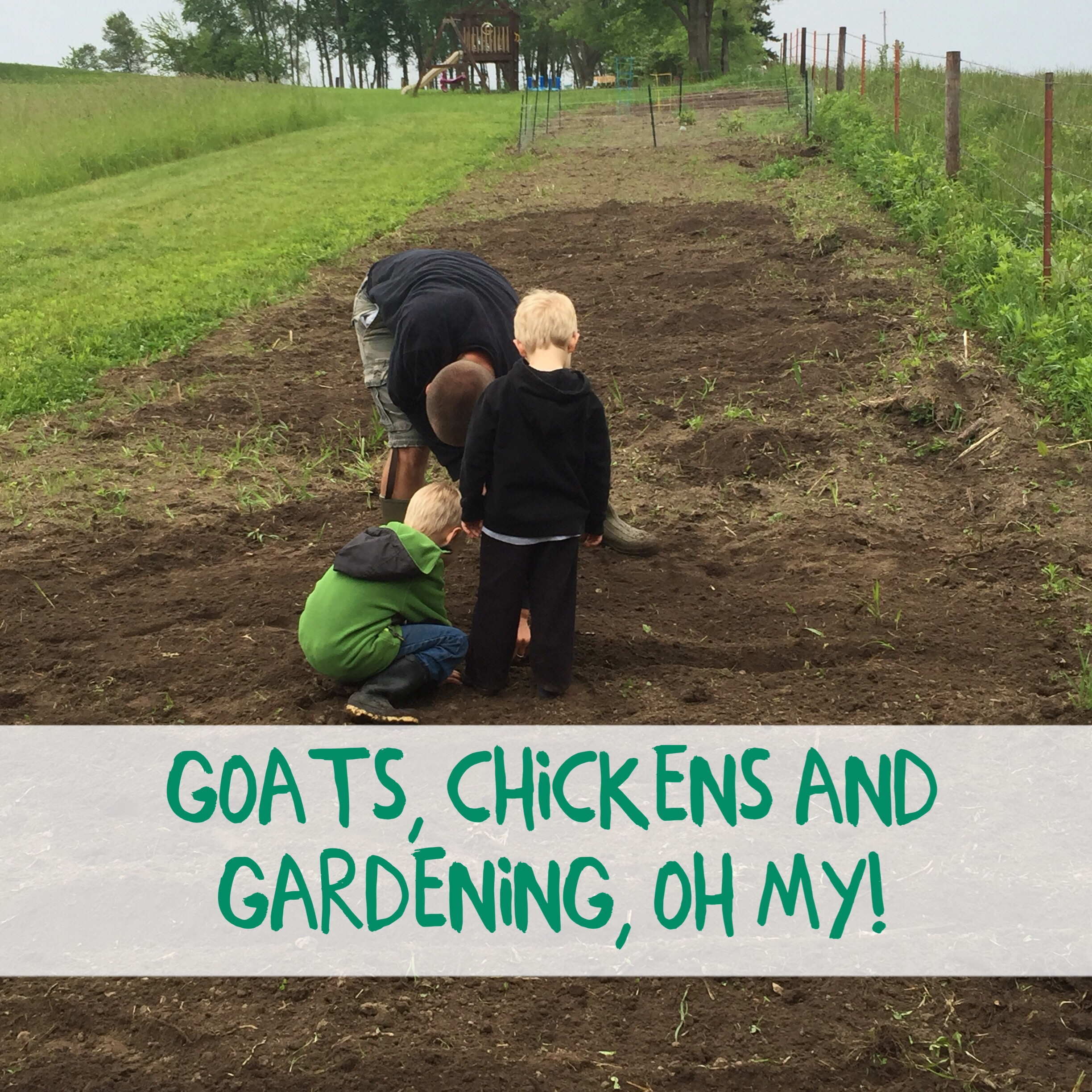Goats, Chickens and Gardening, Oh My!